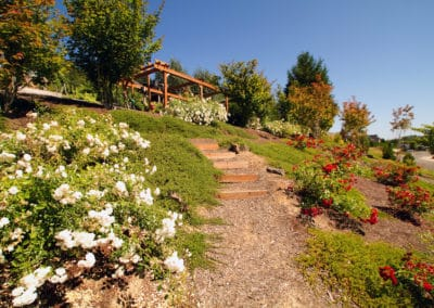 Hillside Landscape of Roses and Natural Paths
