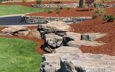 5 secrets about bark mulch everyone needs to know