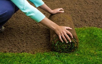 How to Take Care of New Sod: The Essential Guide