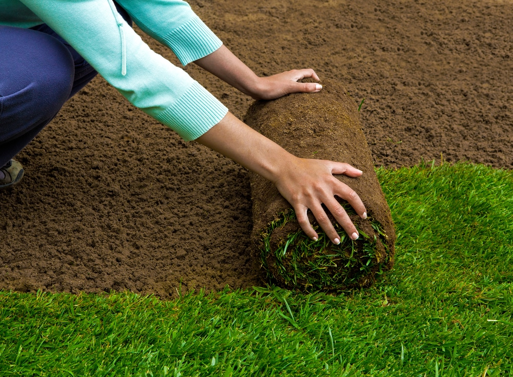 How To Take Care Of New Sod The Essential Guide Green