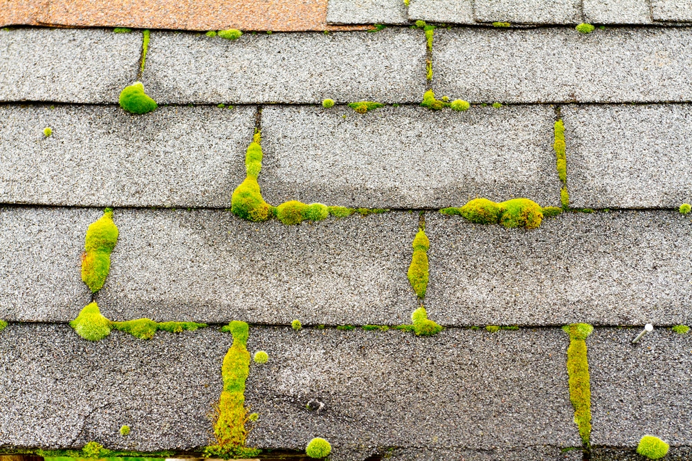 How to Remove Moss: Our Go-To Method That Works for All Surfaces