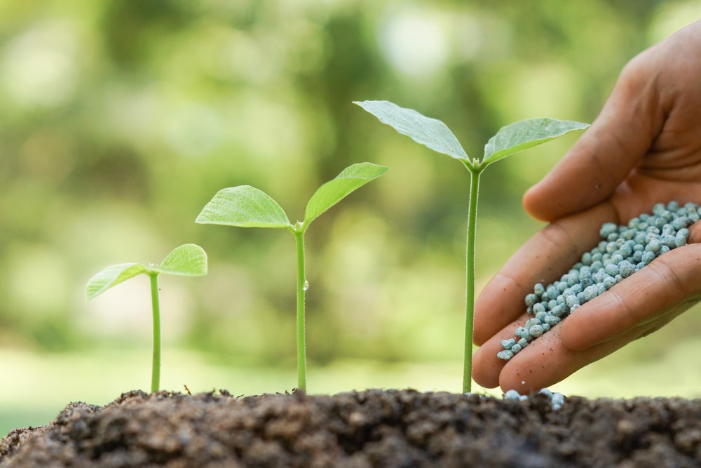 The 5 Problems Everyone Has with Spring Fertilizing – and How to Solve Them