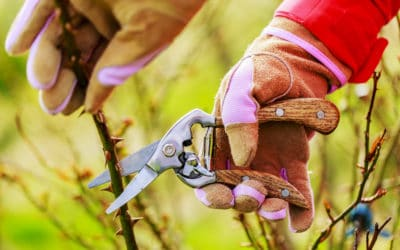 The Ugly Truth About Pruning Roses in Summer
