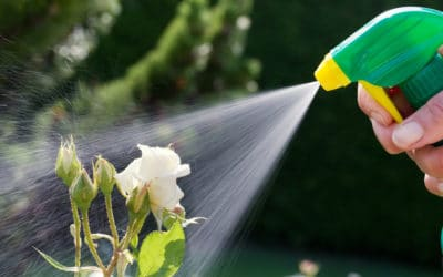 Warning: These 3 Pesticide Mistakes Will Destroy Flowering Plants