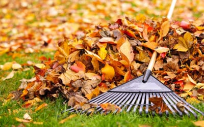 Leaf Clean Up: How to Best Handle The Falling Autumn Leaves