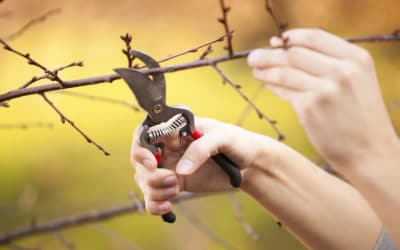 Best Tips for Pruning Trees in the Fall