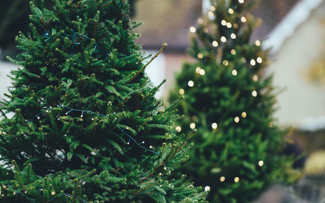 Different Types of Christmas Trees to Choose from this Holiday
