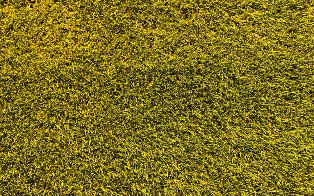 summer fertilizer