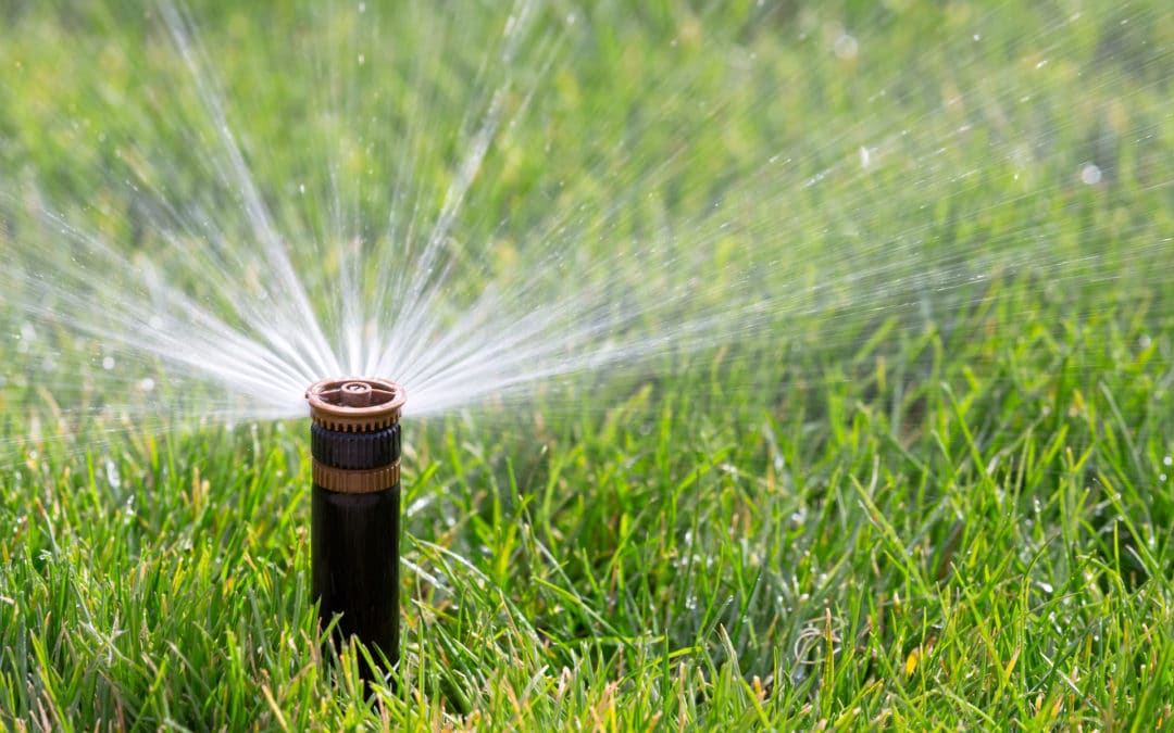 Lawn and Garden Techniques that Conserve Water