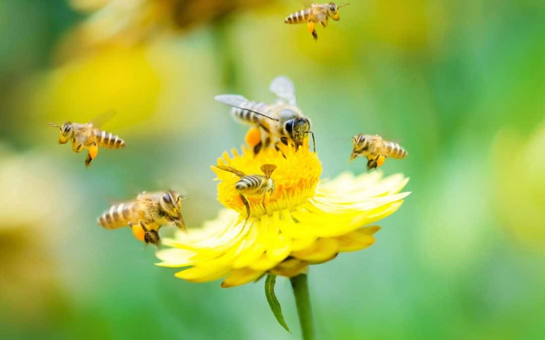 Why It's Important to Attract Bees to Your Garden