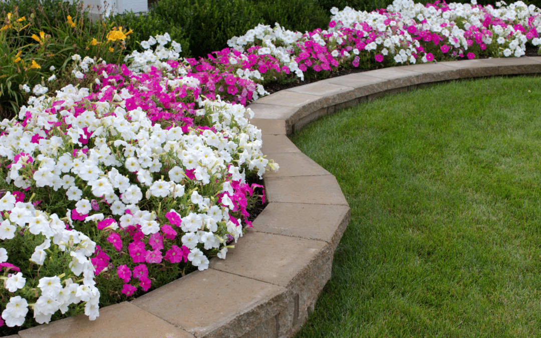 Summer Watering Tips For Your Outdoor Plants