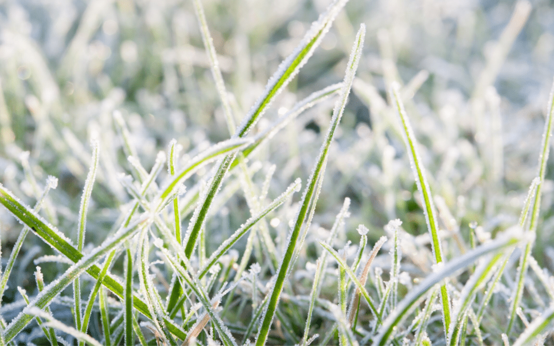 How to Prepare Your Yard and Irrigation System for Winter
