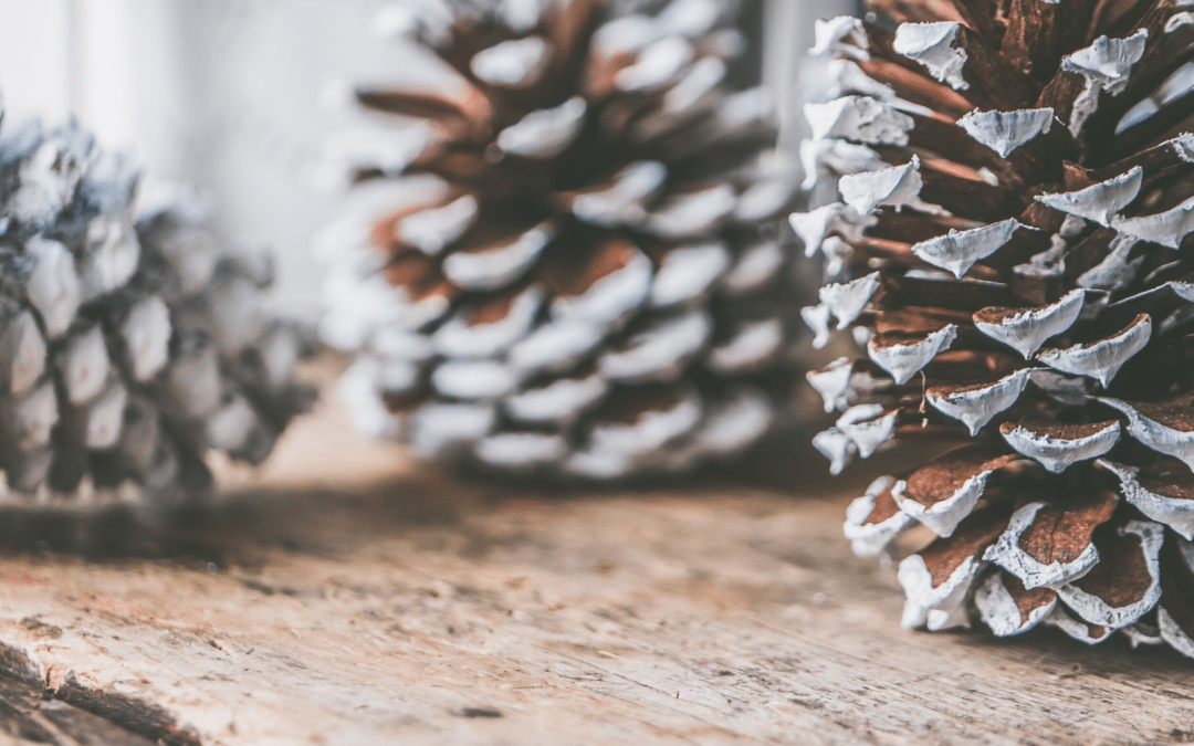 5 Ways to Use Pinecones This Winter