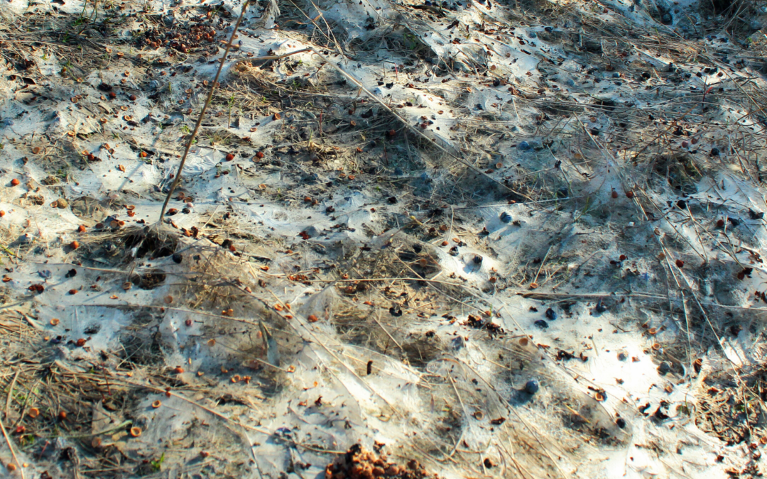 What Causes Snow Mold and How to Get Rid of It