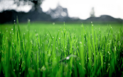 KEEPING YOUR LAWN GREEN & WEED-FREE THIS SUMMER