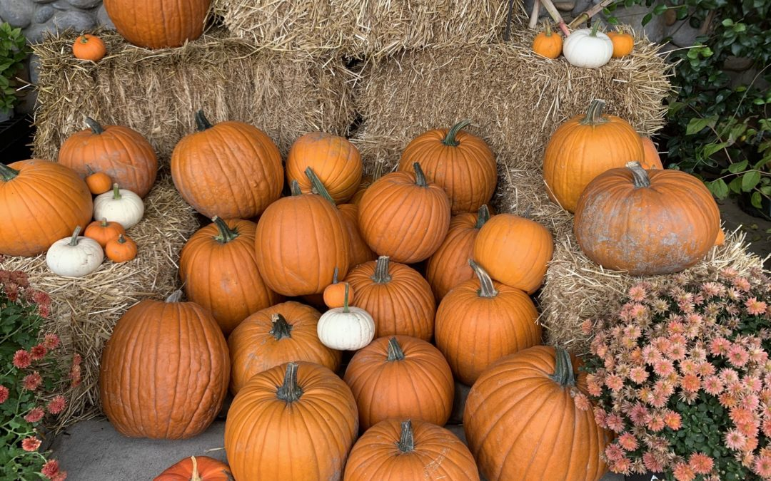 SIX USES FOR PUMPKINS THIS OCTOBER