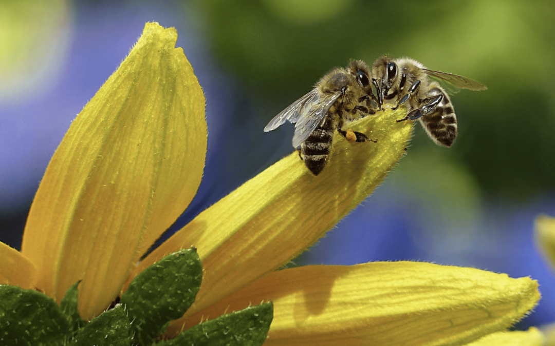 Bee Aware: Co-existing with Bees in the Summer